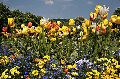 Photograph - Baden-baden Flowers by Endre Balogh