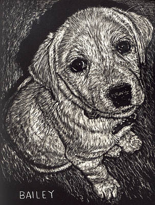 Bailey The Puppy Art Print by Robert Goudreau
