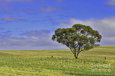 Photograph - Balaklava Plains by Stephen Mitchell