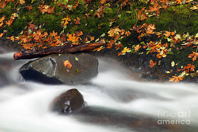 Maple Season Photograph - Balance Of The Seasons by Mike  Dawson