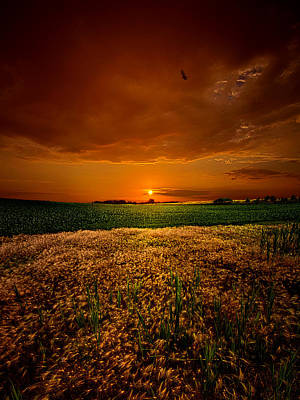 Earth Tone Photograph - Balance by Phil Koch