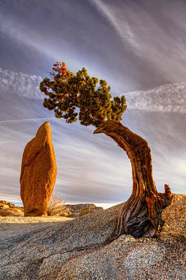 Y120817 Photograph - Balance Rock And Bonzai Tree by Bill Wight CA