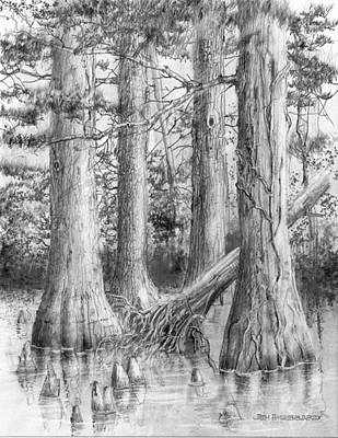Cypress Tree Drawing - Bald Cypress Enhanced by Jim Hubbard
