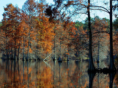 Bald Cypress In Autumn Art Print by Theresa Johnson