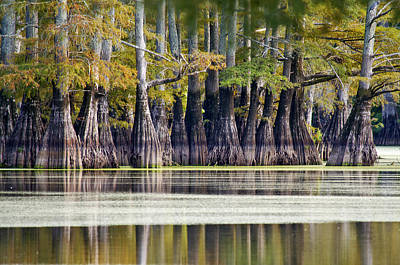 Jeka World Photograph - Bald Cypress Reflections by Jeff Rose