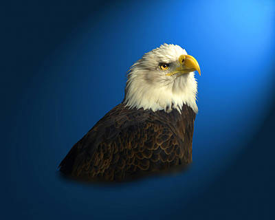 Bald Eagle - Blyth - In Captivity Art Print by J Larry Walker
