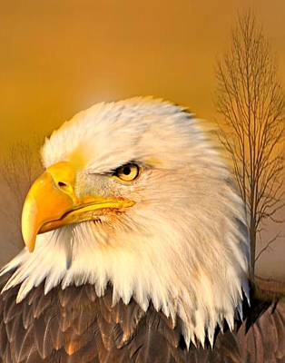Bald Eagle And Tree Art Print by Marty Koch