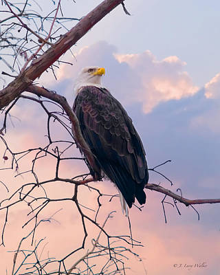 Digital Art - Bald Eagle At Rest by J Larry Walker