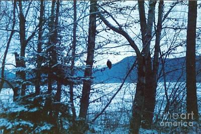 Bald Eagle Haines Alaska Art Print by Judyann Matthews