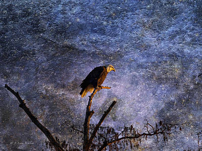 Digital Art - Bald Eagle In Suspense by J Larry Walker