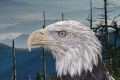 Just Desserts - Bald Eagle in the Mountains by Randall Nyhof