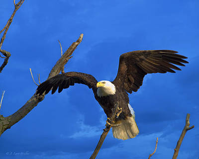 Digital Art - Bald Eagle Landing by J Larry Walker