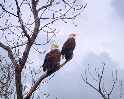 Digital Art - Bald Eagle Pair Looking At Storm Coming by J Larry Walker