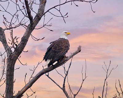 Digital Art - Bald Eagle Watching The Sunrise by J Larry Walker