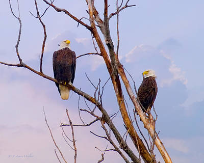 Photograph - Bald Eagles High And Lifted Up by J Larry Walker