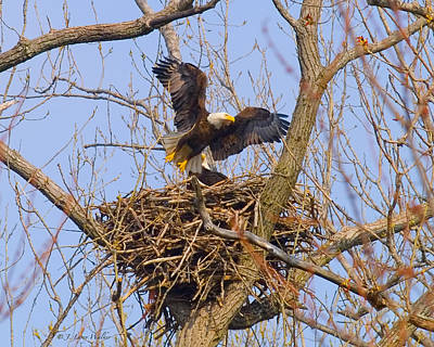Digital Art - Bald Eagles Nest by J Larry Walker