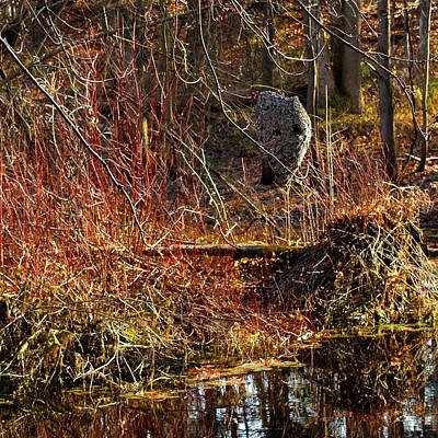 Yellow Photograph - Bald Faced Hornet Nest Pond by LeeAnn McLaneGoetz McLaneGoetzStudioLLCcom