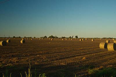 Bales In Peanut Field 9 Art Print by Douglas Barnett