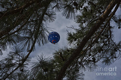Photograph - Balloon In The Pines by Kim Henderson