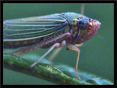 Photograph - Ballpoint-size Bug2 2003 by Glenn Bautista