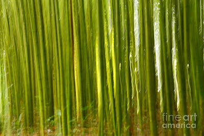 Abstract Movement Photograph - Bamboo Abstract by Gaspar Avila