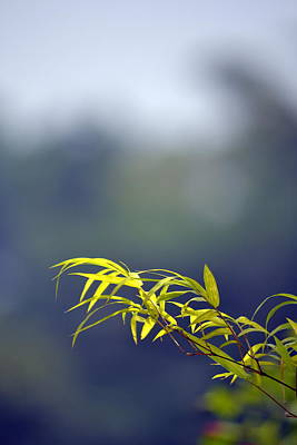 Photograph - Bamboo Blue by Ku Azhar Ku Saud