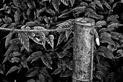 Bamboo Border Art Print by Burney Lieberman
