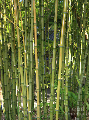 Photograph - Bamboo by Carol Groenen