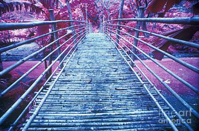 Bamboo Foot Bridge Art Print
