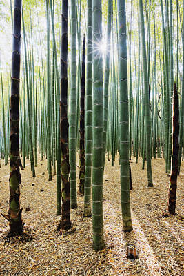 Bamboo Forest Art Print by Jeremy Woodhouse