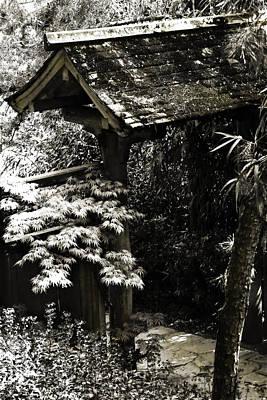 Bamboo Garden -2 Art Print by Alan Hausenflock