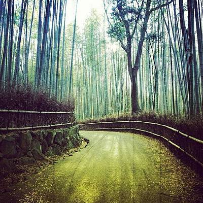 Woodland Photograph - Bamboo Grove Kyoto by Marc Gascoigne