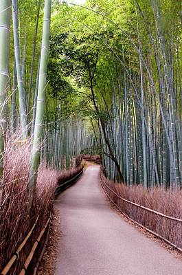 Bamboo Grove Art Print by Shadie Chahine