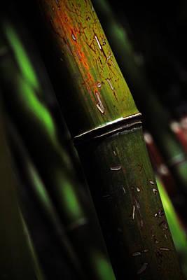 State Love Nancy Ingersoll - Bamboo  by Karol Livote