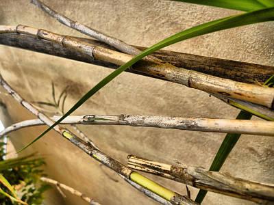 Bamboo Line Original