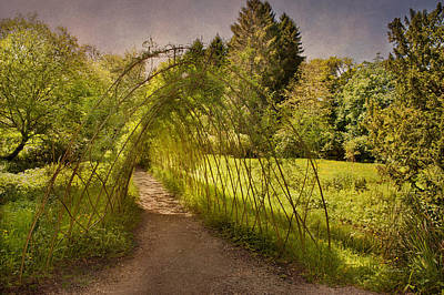 Photograph - Bamboo Pathway by Cheryl Davis