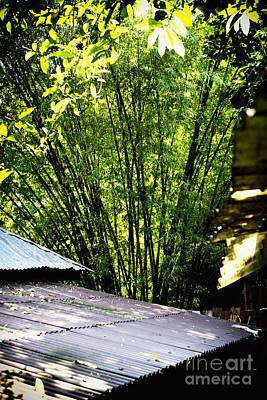 Bamboo Shade Art Print by Thanh Tran