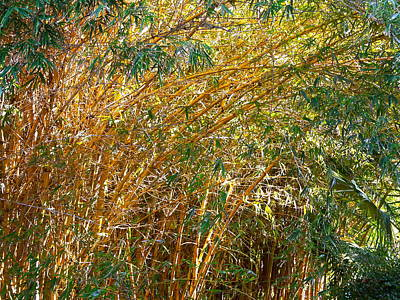 Bamboo Stand Please Buy Me Art Print by Michael Clarke JP