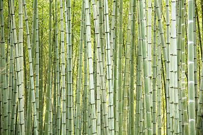 Bamboo Trees Background Art Print by Vaidas Bucys