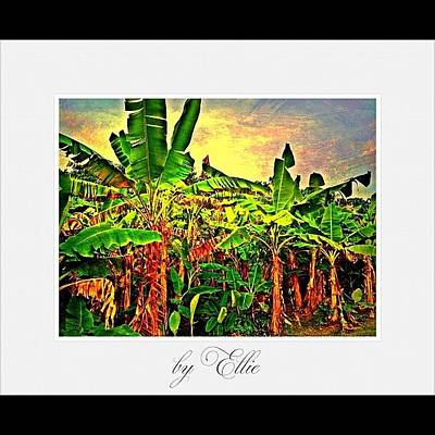 Banana Wall Art - Photograph - Banana Plantation by Ellie Doong