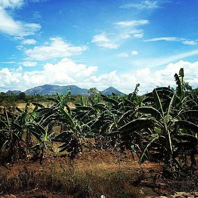 Banana Wall Art - Photograph - #banana #view #srilanka #field #sky by Dikla Fainaro