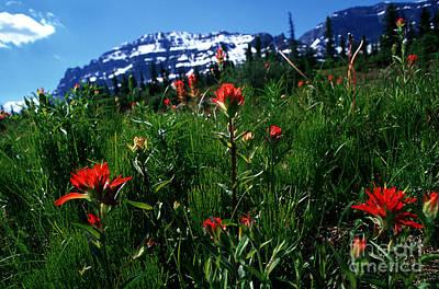 Photograph - Banff - Indian Paintbrush 2 by Terry Elniski