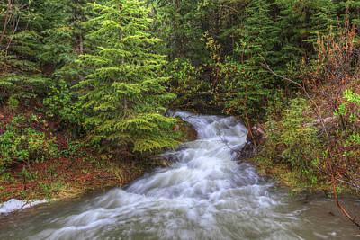 Banff Spring Creek Flow Art Print by Sam Amato