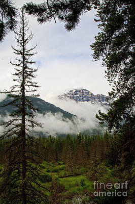Photograph - Banff View by Dennis Hedberg