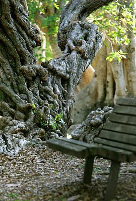 Banyan Tree And Park Bench Art Print by Dennis Clark