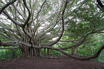Photograph - Banyan Tree by Pierre Leclerc Photography
