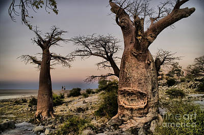 Photograph - Baoabas After The Sunset by Mareko Marciniak