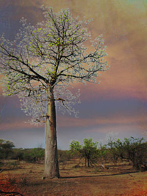 Photograph - Baobab  by Joseph G Holland