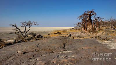 Photograph - baobab on Kubu by Mareko Marciniak