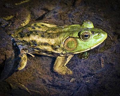 Barataria Swamp Frog Art Print by Ray Devlin